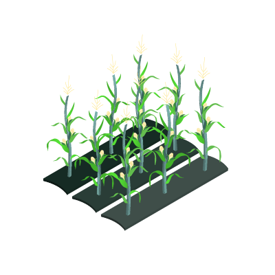 images/gallery/icons/Corn Stalks.png
