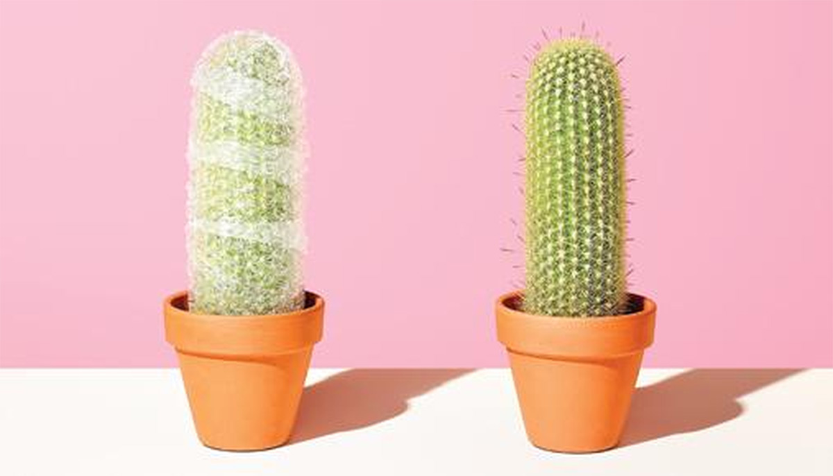 https://tickertapecdn.tdameritrade.com/assets/images/pages/md/two cacti one wrapped in bubble wrap: finding-earnings-strategies