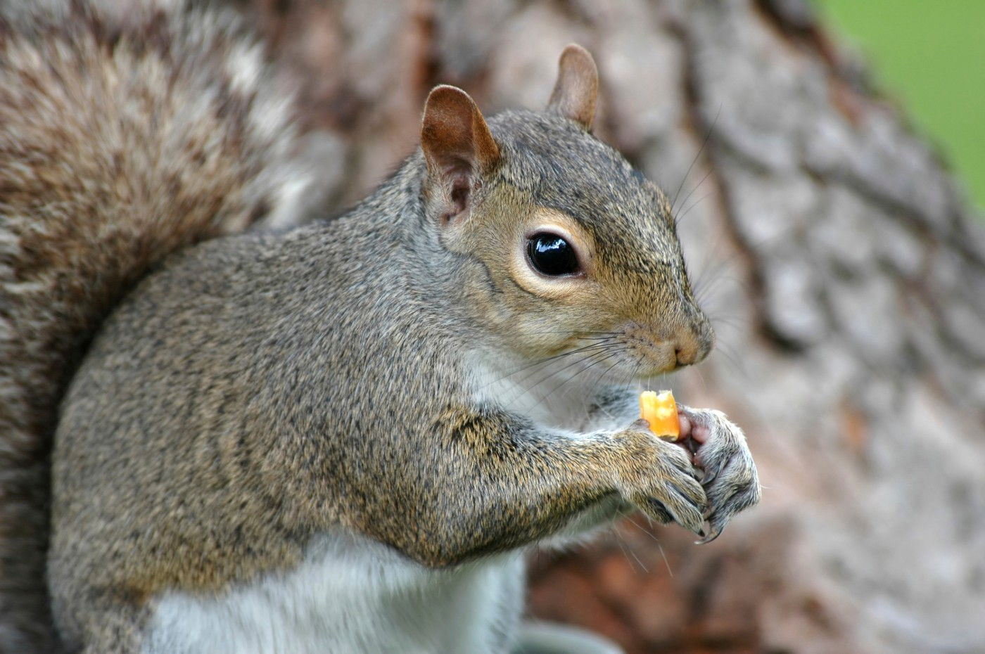 https://tickertapecdn.tdameritrade.com/assets/images/pages/md/Squirrel: How 401(k) fees can affect retirement savings