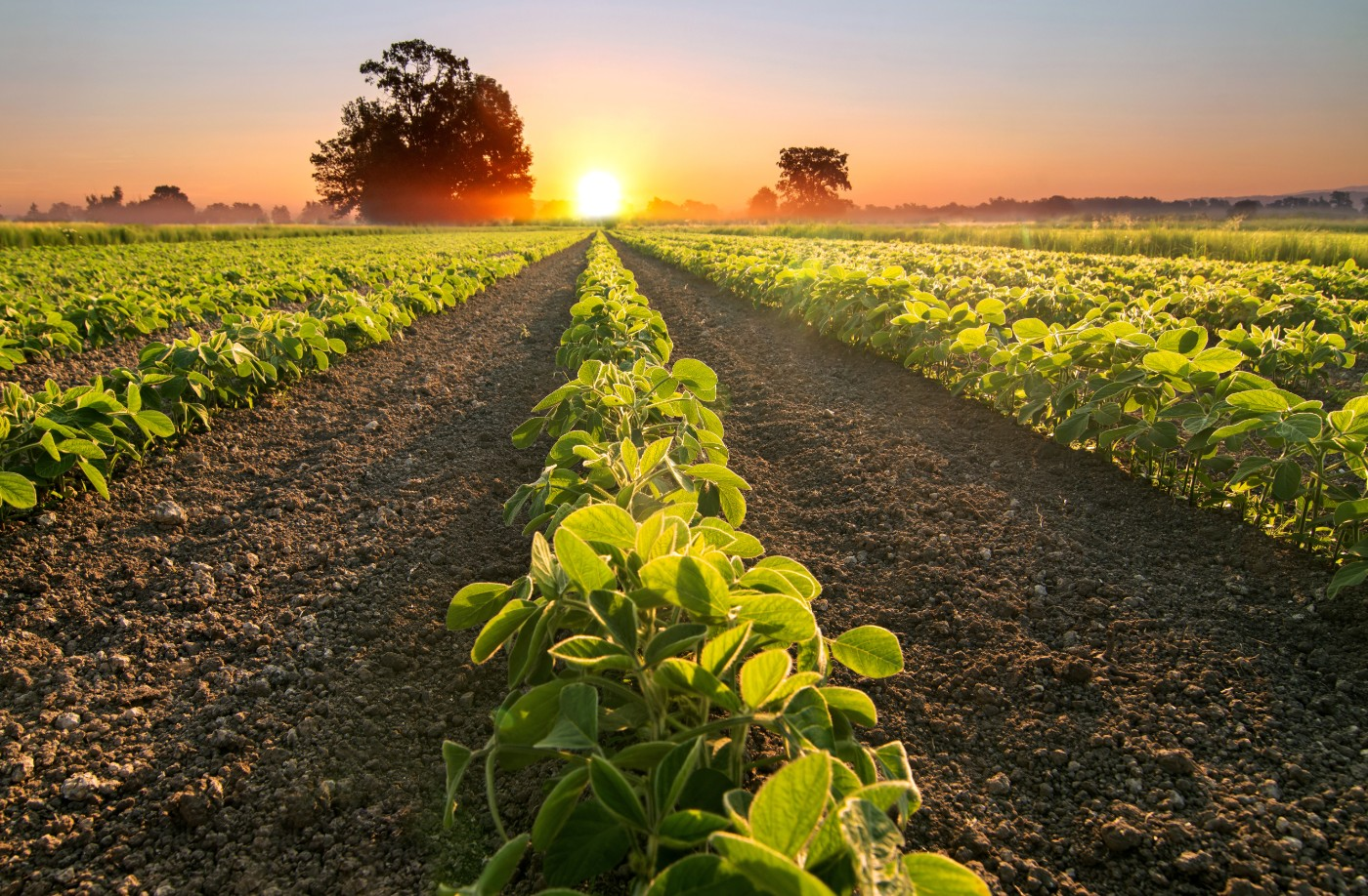 https://tickertapecdn.tdameritrade.com/assets/images/pages/md/Soybeans: commodity futures, contango, backwardation