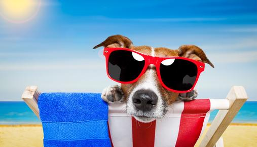 https://tickertapecdn.tdameritrade.com/assets/images/pages/md/Option Calendar Spreads for the Dog Days of Summer