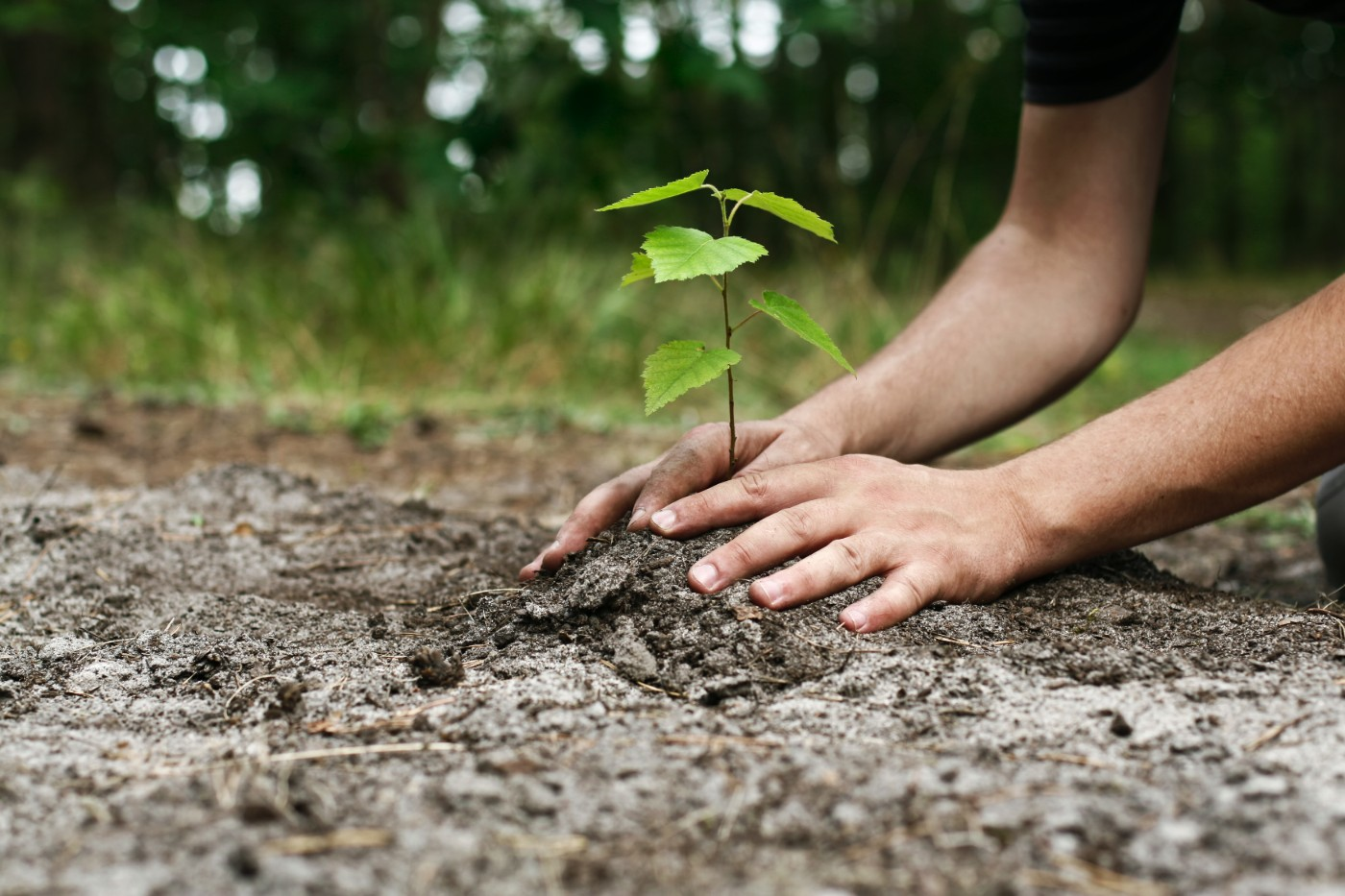https://tickertapecdn.tdameritrade.com/assets/images/pages/md/close-up of hands planting a leafy plant: environmental, social, and governance investing