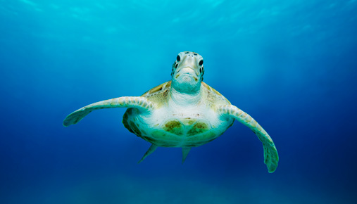 https://tickertapecdn.tdameritrade.com/assets/images/pages/md/Sea turtle: Rules-based trading helped the turtle traders navigate the markets