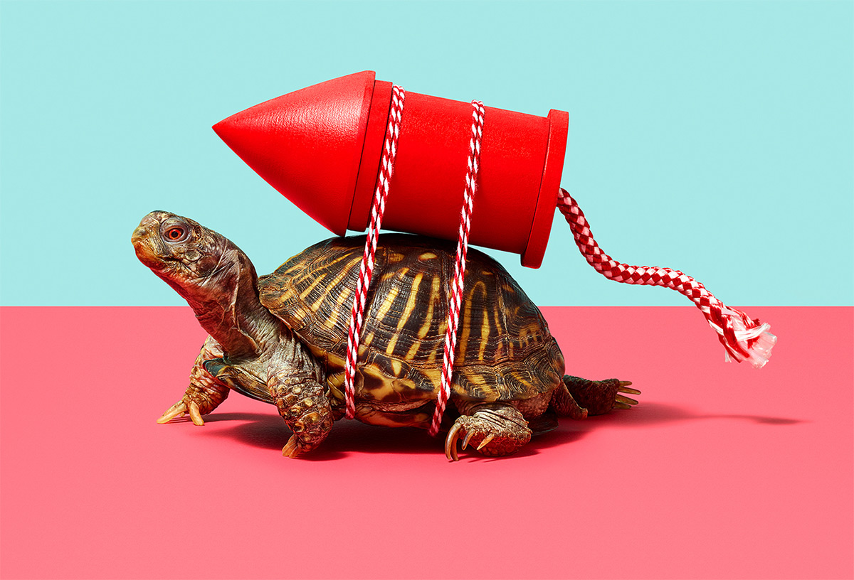 https://tickertapecdn.tdameritrade.com/assets/images/pages/md/turtle with red rocket strapped to back