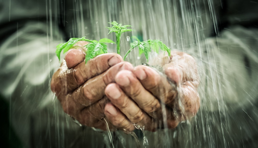 https://tickertapecdn.tdameritrade.com/assets/images/pages/md/Planting a seed for the future: Estate planning to benefit both you and your heirs