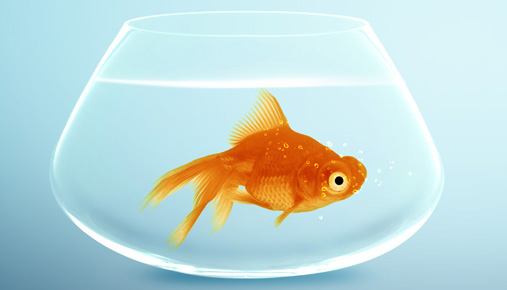 https://tickertapecdn.tdameritrade.com/assets/images/pages/md/Goldfish in a bowl: Savings in an IRA or 401(k); what to do with extra money from a wage increase