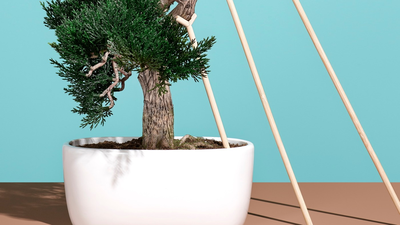 https://tickertapecdn.tdameritrade.com/assets/images/pages/md/bonsai tree with small supports: laddering puts in ira