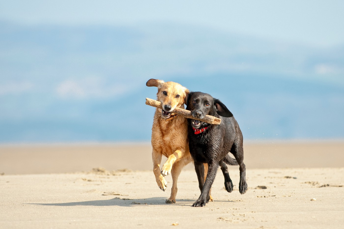 https://tickertapecdn.tdameritrade.com/assets/images/pages/md/Pair of dogs: How pairs trading and market relationships work