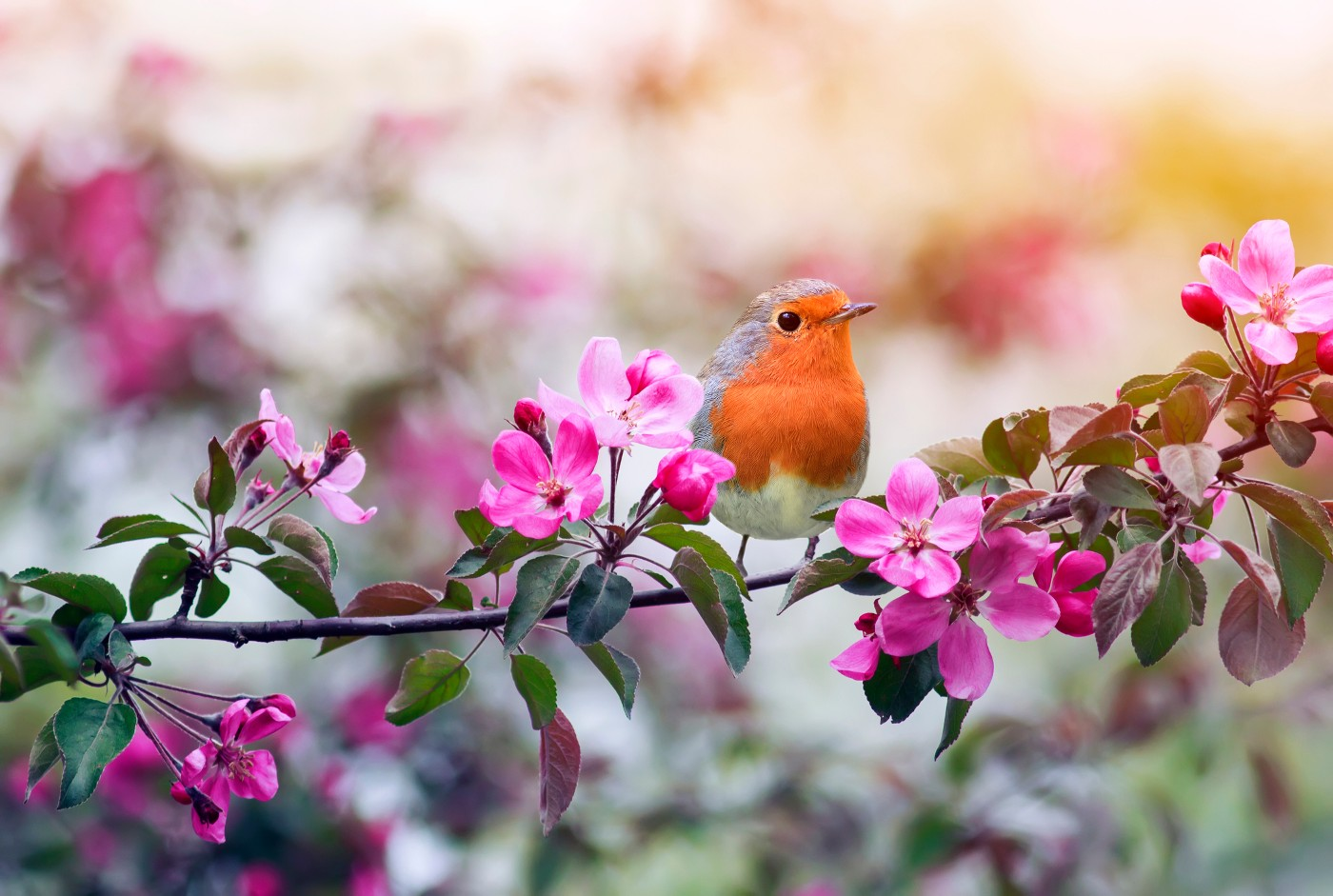 https://tickertapecdn.tdameritrade.com/assets/images/pages/md/Bird on a branch with pink flowers: Seasonal myths for traders