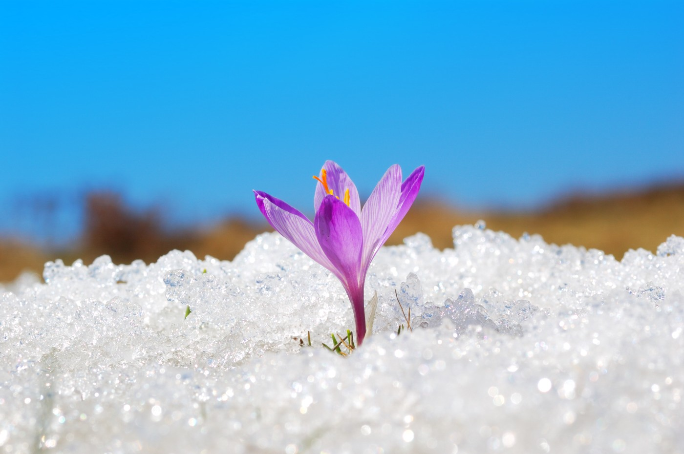 https://tickertapecdn.tdameritrade.com/assets/images/pages/md/Spring thaw: Growing financial literacy