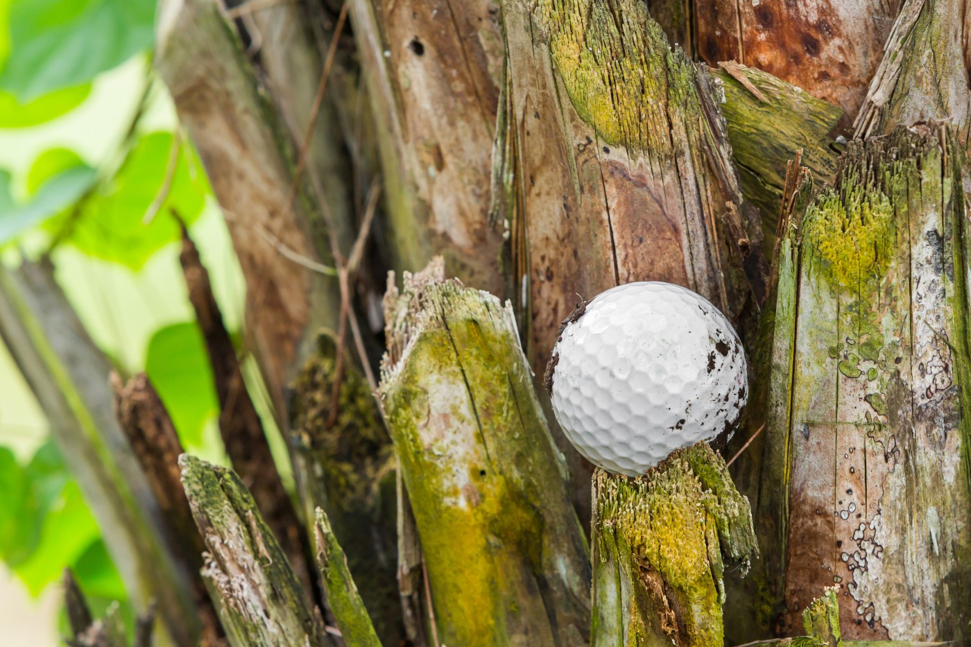 https://tickertapecdn.tdameritrade.com/assets/images/pages/md/Golf ball stuck in a tree: Stock replacement strategy