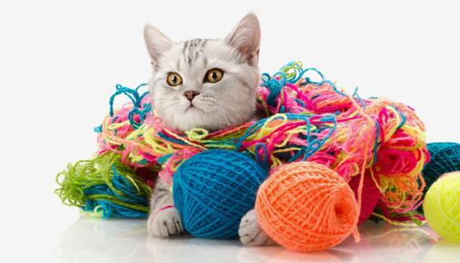 https://tickertapecdn.tdameritrade.com/assets/images/pages/md/Cat in yarn: Traders can tie off loose ends--tax considerations--before year's end