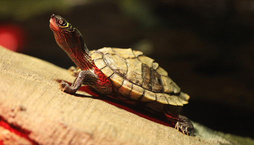 https://tickertapecdn.tdameritrade.com/assets/images/pages/md/Turtle traders: Follow the trend to trade like a turtle.