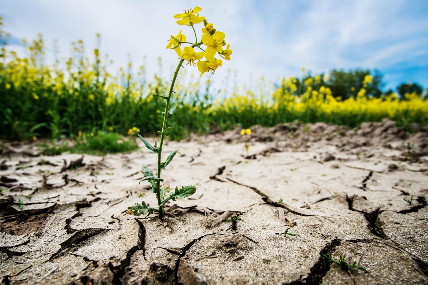 https://tickertapecdn.tdameritrade.com/assets/images/pages/md/Flower blooming from dried-up earth: Growing water trade investment opportunities