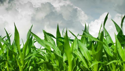https://tickertapecdn.tdameritrade.com/assets/images/pages/md/Weather Market: Corn and Energy