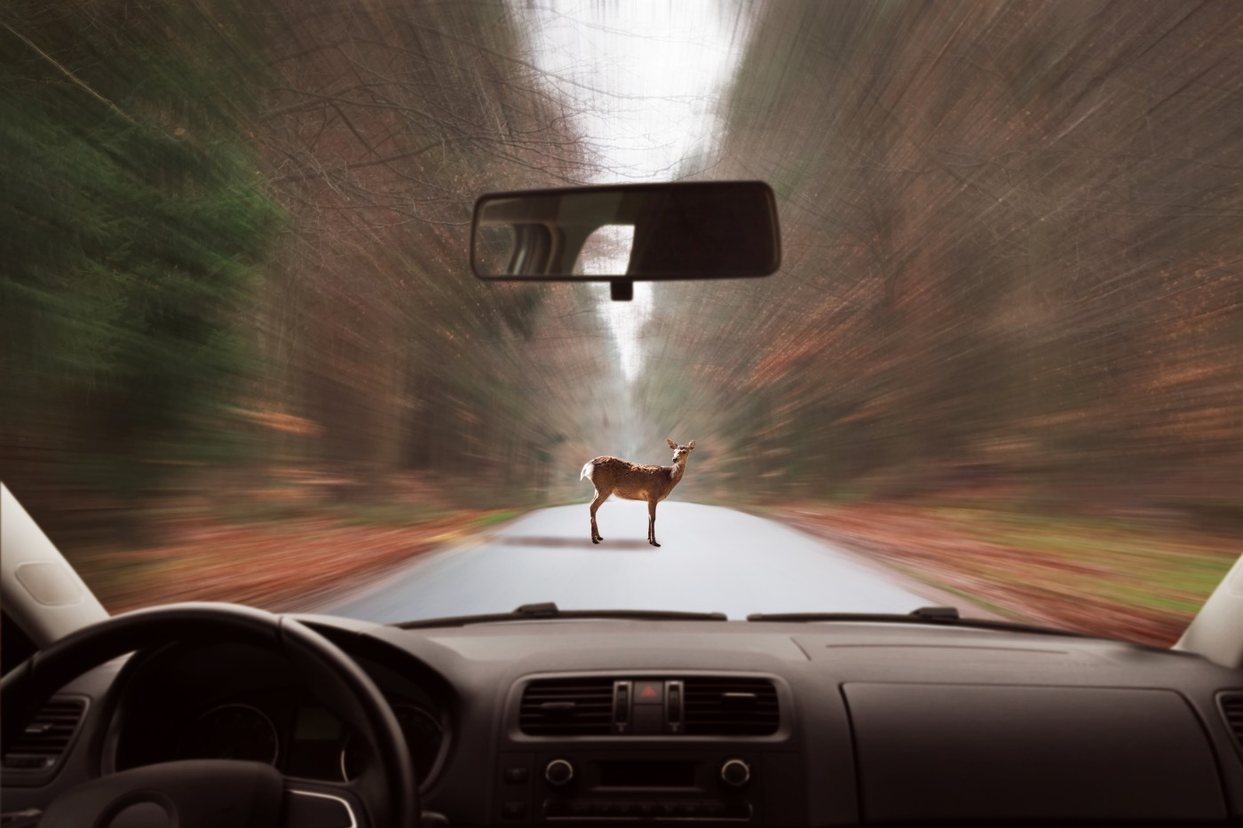 https://tickertapecdn.tdameritrade.com/assets/images/pages/md/deer in the headlights: young investors surviving a crash