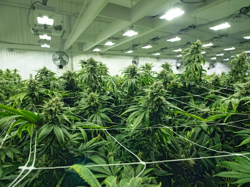 Pot stocks: Cannabis investor market in 2020