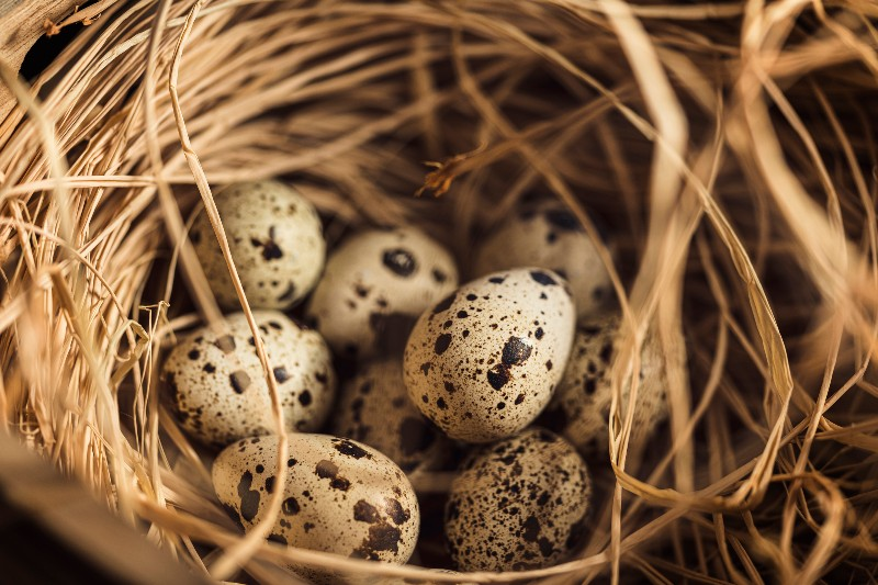 Eggs in a nest: Retirement income nest egg